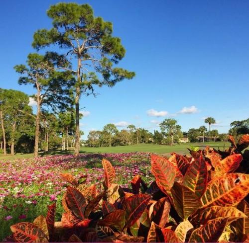 Royal Palm Country Club Naples FL